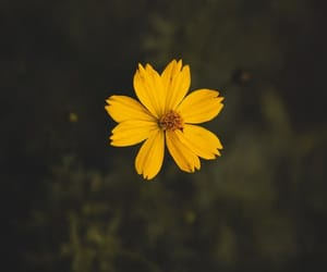 flower, yellow, and cute image