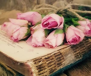 old book, pink roses, and roses image