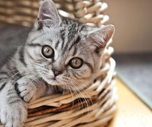 cat, adorable, and basket image