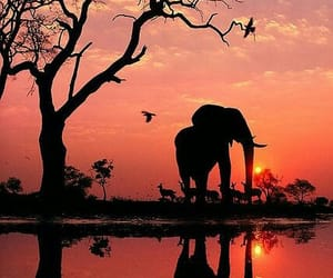 beautiful, elephant, and nature image