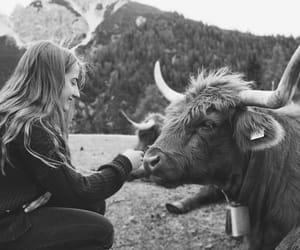 animals, travel, and austria image