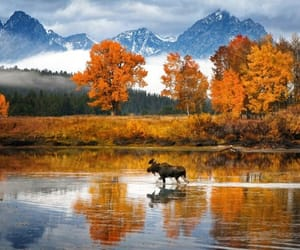 animals, mountains, and wildlife photography image