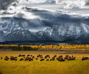 autumn, bison, and mountains image