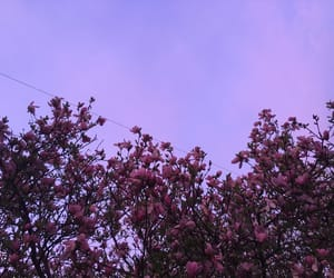 aesthetic, alternative, and flora image
