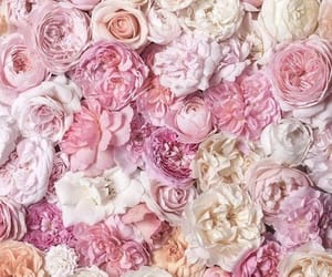 flowers, peony, and roses image