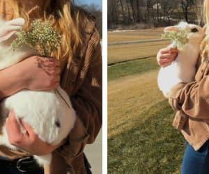 tumblr, white rabbit, and beauty image