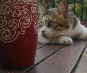 terrace, cat, and coffee image
