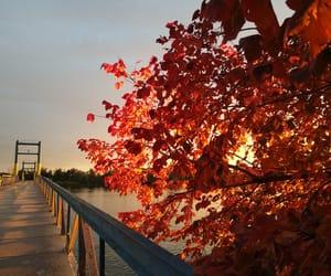 autumn, bridge, and orange image