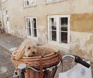 Image by Catja Jensen