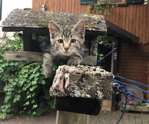 cat, outdoor, and love image