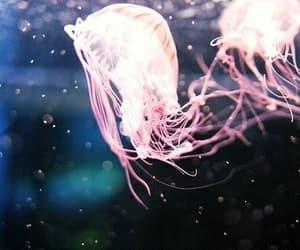aquarium, deep sea, and jellyfish image