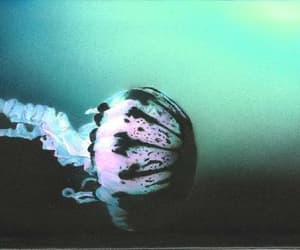 deep sea, méduse, and glow image