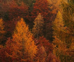 aesthetic, autumn, and forest image