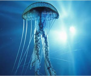 blue, jelly fish, and ocean image