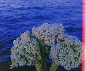 beautiful, photography, and white flowers image