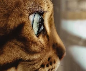 cat, eye, and focus image