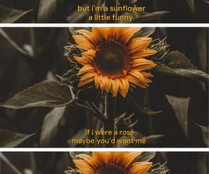 sunflower, love, and sierra burgess is a loser image