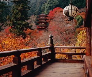 autumn, japan, and leaves image