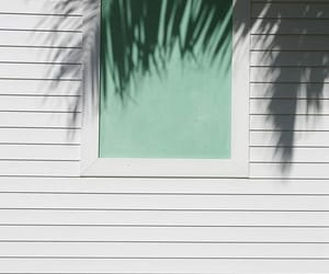 summer, shadow, and palms image