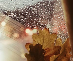 autumn, bokeh, and fall image