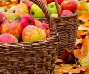 apples and fall image