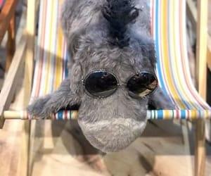 chair, eeyore, and sunglasses image
