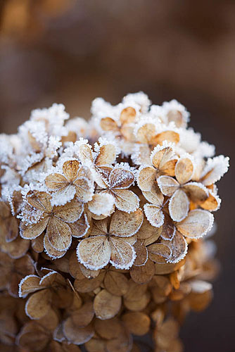 christmas, frosty, and winter image