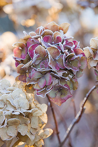 christmas, frosty, and gardens image