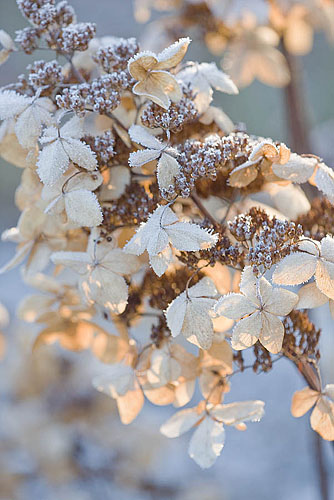 christmas, gardens, and fantasy image