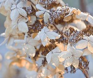christmas, gardens, and rhs image