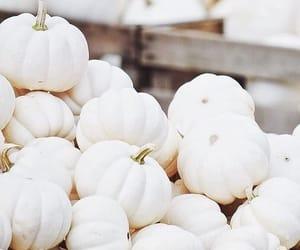 pumpkin, autumn, and white image
