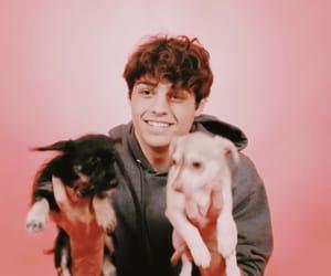 boy, dog, and Hot image