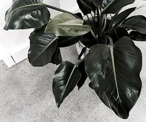 plant, interior, and minimalist image