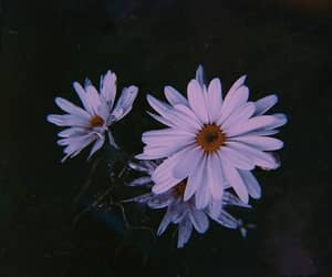 flowers, nature, and pic image
