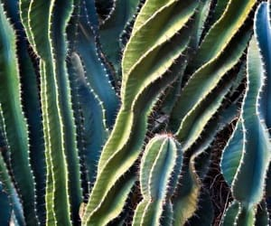 cactus, green, and nature image