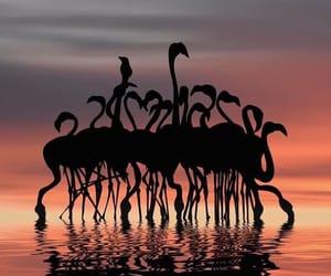 flamingo, sunrise, and sunset image