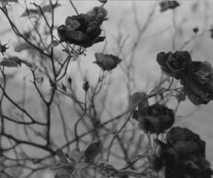 flowers, rose, and black and white image