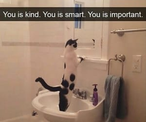 cat, important, and selflove image