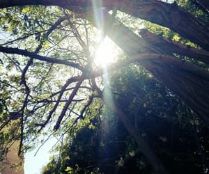 arbre, nature, and sun image