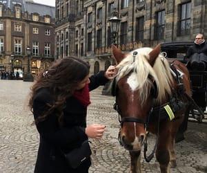 amsterdam, animal, and travel image