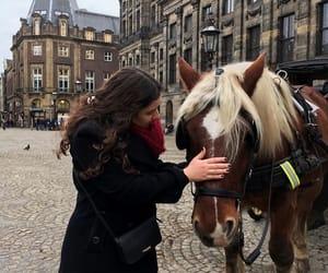 amsterdam, animal, and girl image