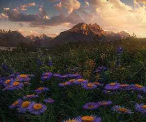 Glacier National Park, wildflowers, and mountain image
