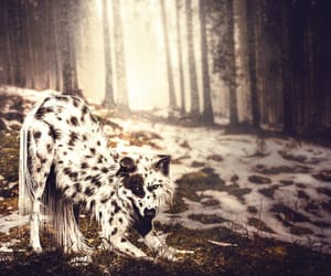 dalmatian, pinto, and wolf image
