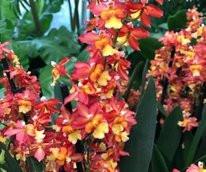 flowers and orchids image