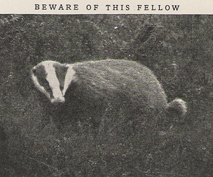 aw, scanned, and badger image
