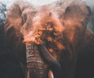 animal, nature, and elephant image