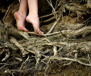 feet, nature, and roots image
