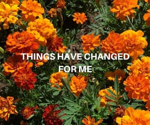 change, flowers, and quote image