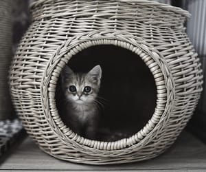animals, pets, and basket image