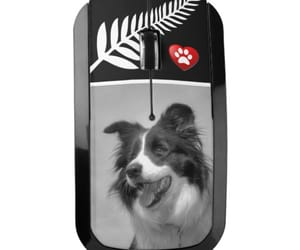 animal, border collie, and dogs image